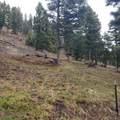 2306 Hidden Canyon Road - Photo 18