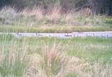Tbd Cotton Willow-Diamond T Ranch - Photo 9