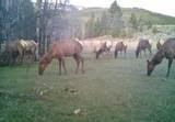 1270 Nevada Creek Ranch Drive - Photo 13