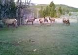1270 Nevada Creek Ranch Drive - Photo 14