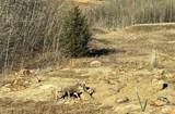 495 Aspen Hills Trail - Photo 54