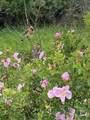 3950 Floweree Drive - Photo 8