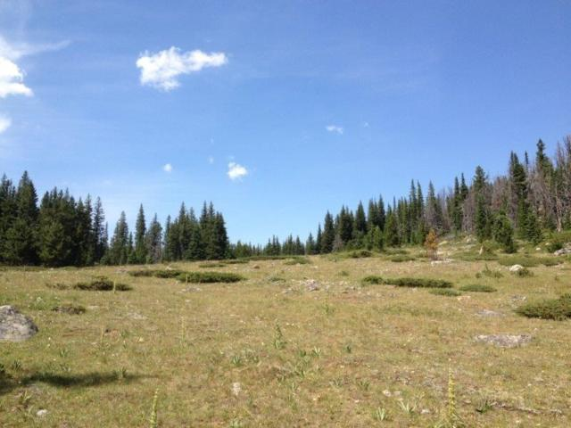 TBD Forest Service Road 175, Basin, MT 59631 (MLS #1302131) :: Keith Fank Team
