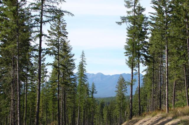 589 Saddlehorn Trail, Bigfork, MT 59911 (MLS #21901890) :: Loft Real Estate Team