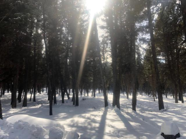 Nhn Grandview Drive, Seeley Lake, MT 59868 (MLS #21902828) :: Andy O Realty Group