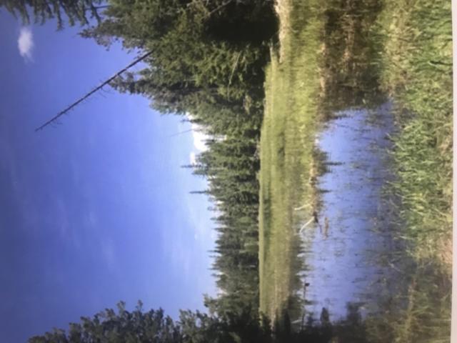 Nhh Duck Lost Prairie, Marion, MT 59925 (MLS #21903865) :: Loft Real Estate Team