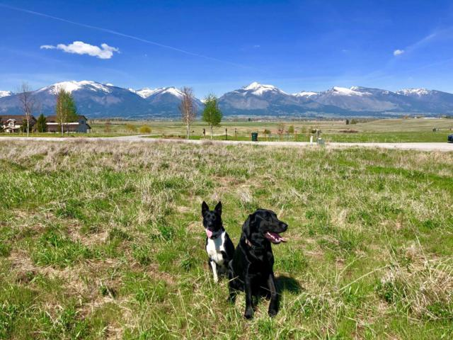 Lot 16 Cayuse Trail, Corvallis, MT 59828 (MLS #21907351) :: Brett Kelly Group, Performance Real Estate