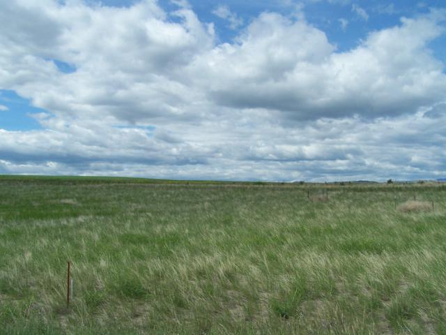 Lot 4 A Diamond Gulch Road, Townsend, MT 59644 (MLS #21909577) :: Andy O Realty Group