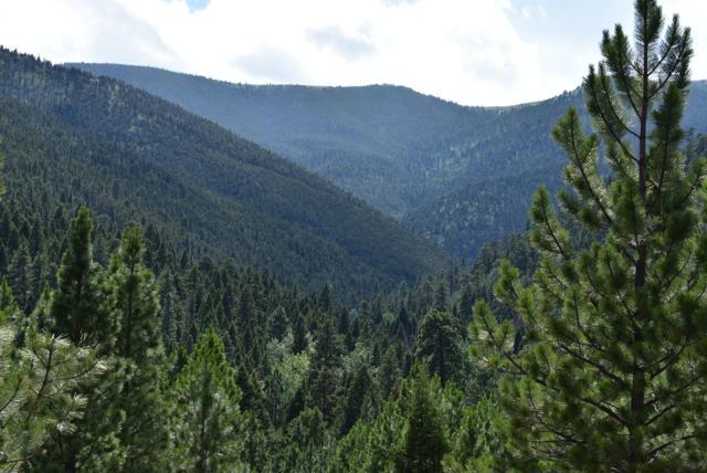 Tbd Lyons Creek, Wolf Creek, MT 59648 (MLS #21912092) :: Andy O Realty Group