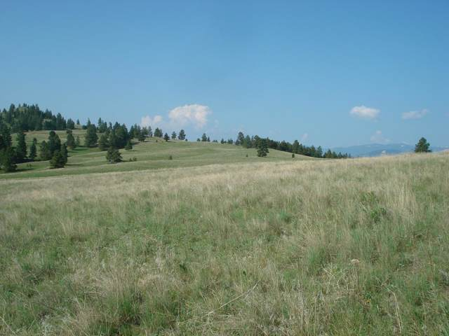 34 Mountain Meadows Road, Clancy, MT 59634 (MLS #22000422) :: Andy O Realty Group