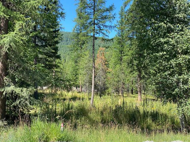 Nhn State Park Road, Whitefish, MT 59937 (MLS #22012231) :: Performance Real Estate