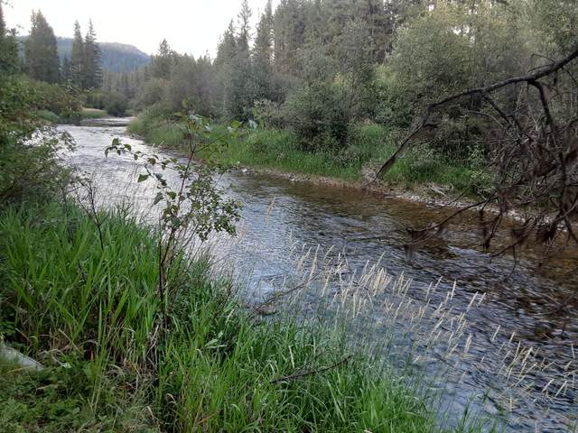Nhn Grubstake Trail, Yaak, MT 59935 (MLS #22012743) :: Performance Real Estate