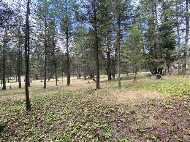 Lot 51 Forest Loop Road, Fortine, MT 59918 (MLS #22013698) :: Whitefish Escapes Realty