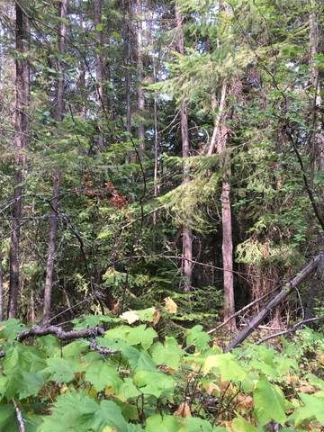 Lot 40 Rocky Lane, Thompson Falls, MT 59873 (MLS #22013776) :: Montana Life Real Estate
