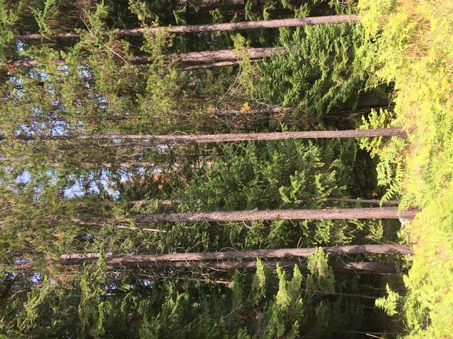 Lot 41 Rocky Lane, Thompson Falls, MT 59873 (MLS #22013777) :: Montana Life Real Estate