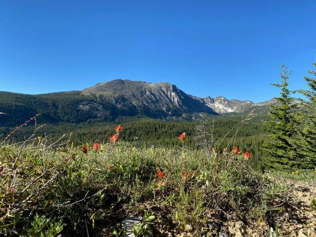 Avon Trapper Creek Road, Melrose, MT 59743 (MLS #22101107) :: Andy O Realty Group