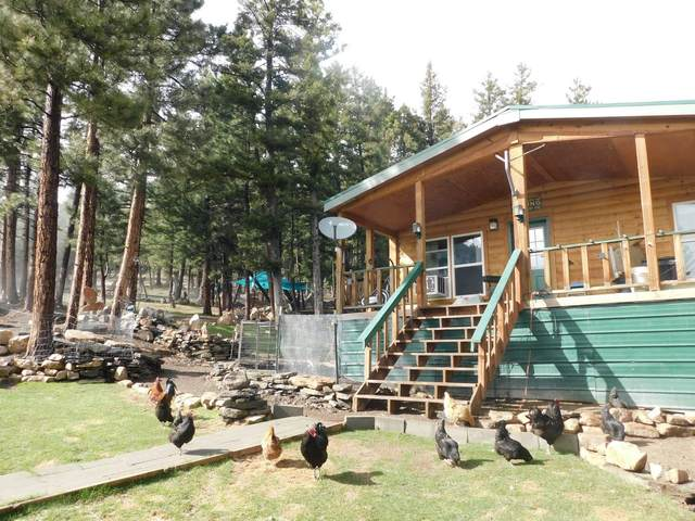 3147 Allen Gulch Road, Wolf Creek, MT 59648 (MLS #22107055) :: Dahlquist Realtors