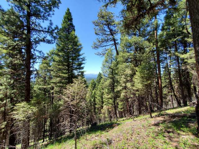 496 Stagecoach Drive, Seeley Lake, MT 59868 (MLS #22109227) :: Montana Life Real Estate