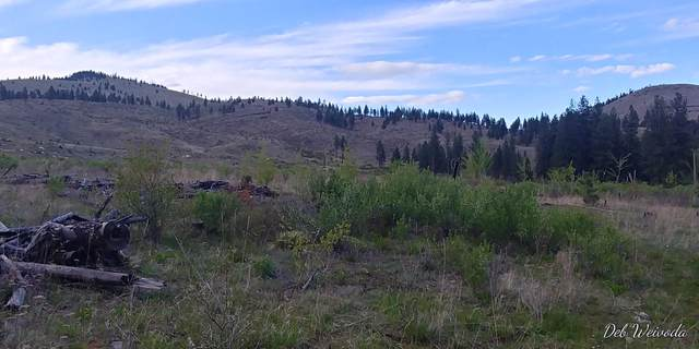 Nhn Mill Creek Road, Hot Springs, MT 59845 (MLS #22109423) :: Peak Property Advisors