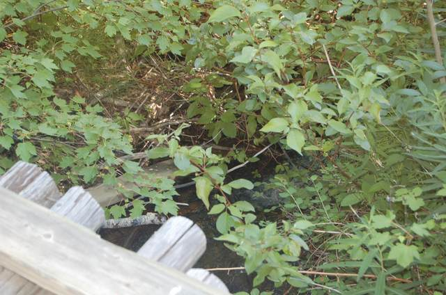 Tbd Woods Creek Road, Wolf Creek, MT 59648 (MLS #22110170) :: Andy O Realty Group