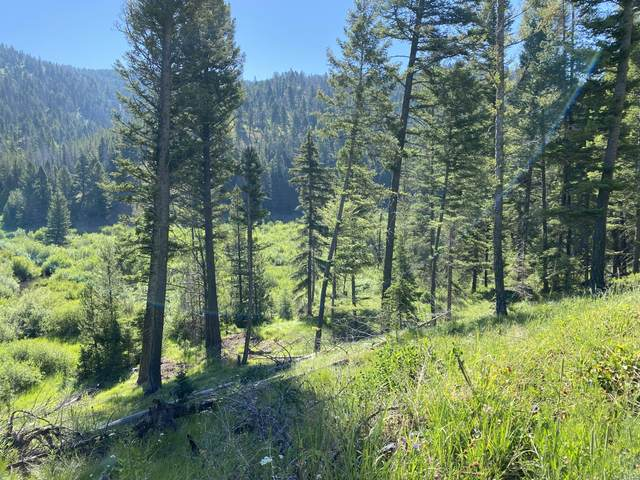 Tbd Hogum Creek Road, Lincoln, MT 59639 (MLS #22110416) :: Andy O Realty Group