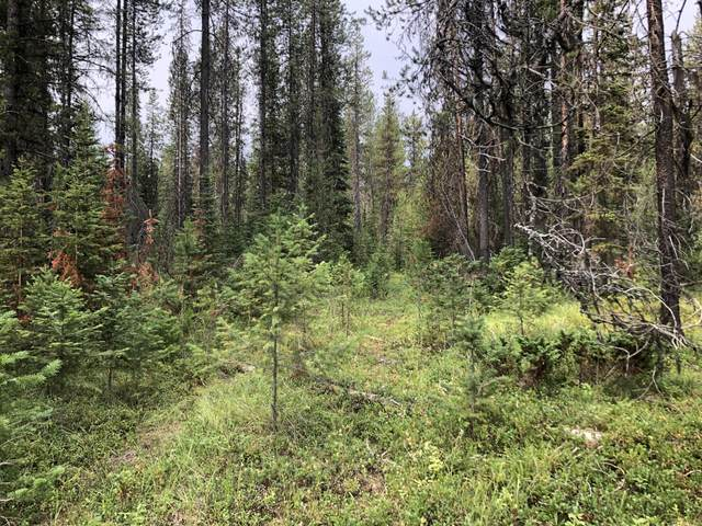 Nhn Hwy 93 N, Whitefish, MT 59937 (MLS #22111518) :: Whitefish Escapes Realty