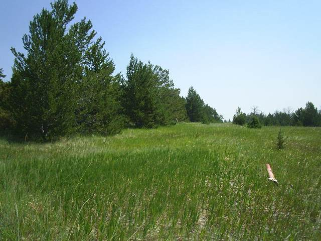 Lot 32 Iron Ridge Loop, Helena, MT 59602 (MLS #22111638) :: Whitefish Escapes Realty