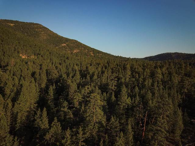 Nhn Gladstone Creek Road, Wolf Creek, MT 59648 (MLS #22111690) :: Whitefish Escapes Realty