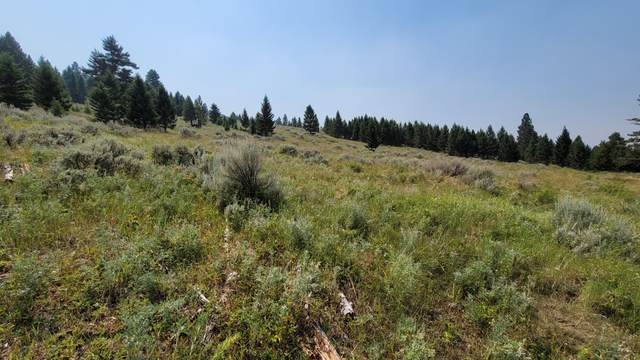 Tbd Tract 4 Wineglass Grazing, Helmville, MT 59843 (MLS #22112124) :: Whitefish Escapes Realty