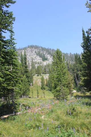 1 Nut Pine Lode, Philipsburg, MT 59858 (MLS #22113245) :: Andy O Realty Group