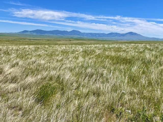 Tbd Little Belt Way, Belt, MT 59412 (MLS #22113437) :: Montana Life Real Estate