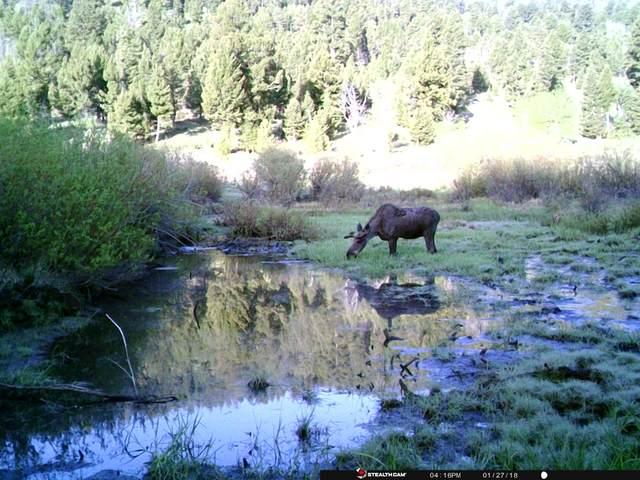 Copper Camp Creek Road, Butte, MT 59701 (MLS #22114435) :: Peak Property Advisors
