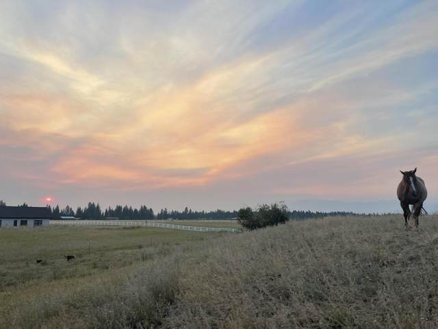 577 Antler Bluff Lane, Columbia Falls, MT 59912 (MLS #22116317) :: Whitefish Escapes Realty