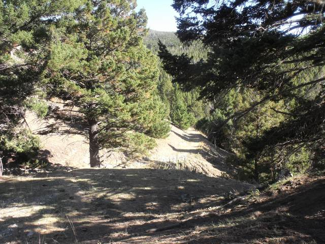 Tbd Empire Creek Road, Canyon Creek, MT 59633 (MLS #22116450) :: Andy O Realty Group