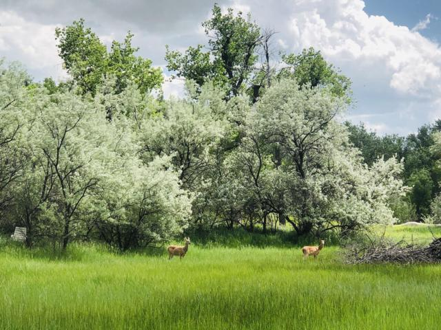 Nhn Lower River Road, Great Falls, MT 59405 (MLS #21904752) :: Andy O Realty Group