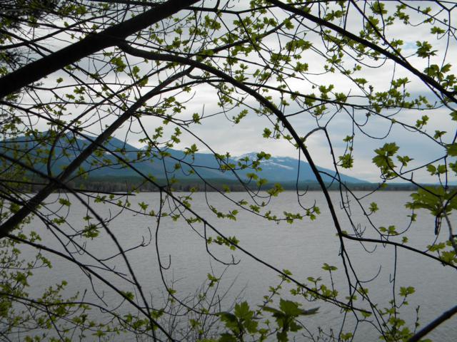 Nka Geri Lane, Swan Lake, MT 59911 (MLS #21908564) :: Andy O Realty Group