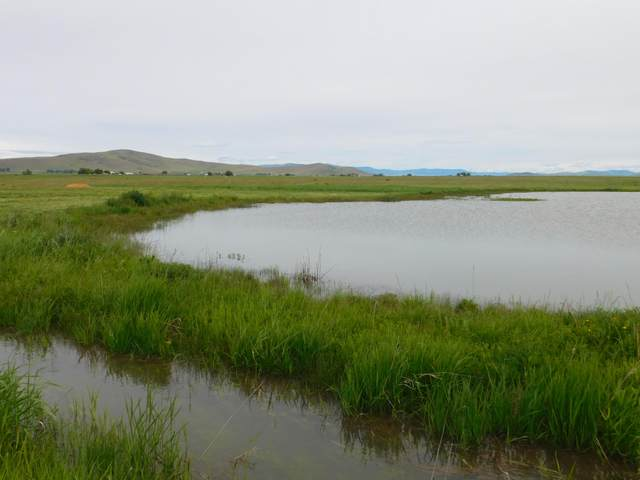 39060 Drop Tine Lane, Charlo, MT 59824 (MLS #22008081) :: Montana Life Real Estate