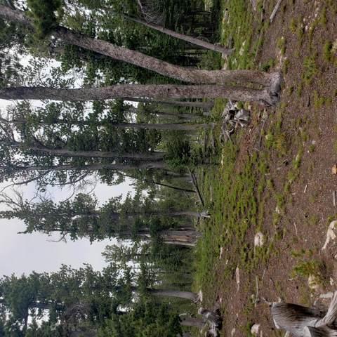 Tbd Rosa Trail, Anaconda, MT 59711 (MLS #22111398) :: Montana Life Real Estate