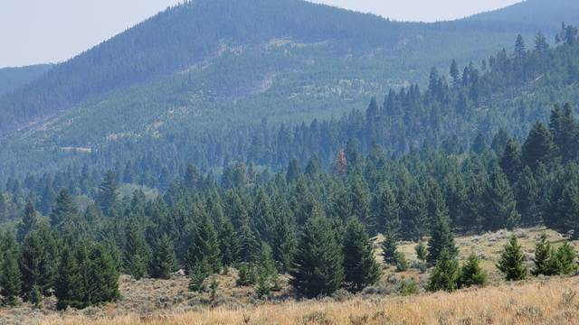 Tbd Tract 7 Wineglass Grazing, Helmville, MT 59843 (MLS #22112128) :: Andy O Realty Group