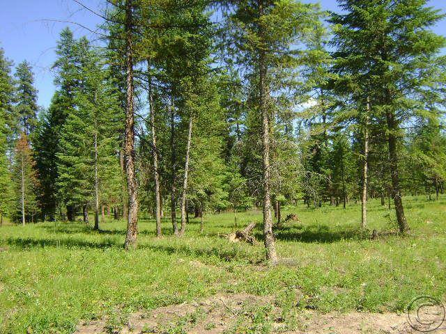 Lot 17 Quarter Circle Cross, Saint Regis, MT 59866 (MLS #20153210) :: Performance Real Estate