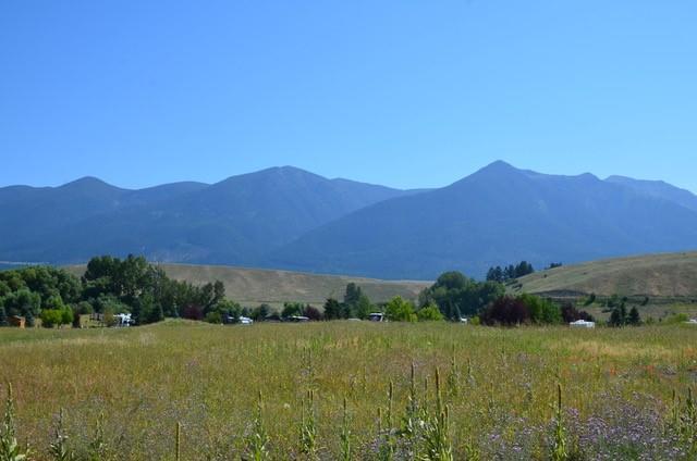 Nhn Cattle Run, Eureka, MT 59917 (MLS #21809234) :: Loft Real Estate Team