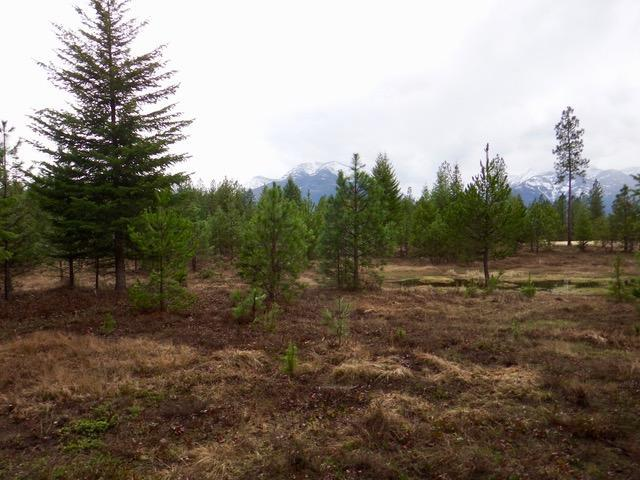 Lot 6 Deer Field Road, Libby, MT 59923 (MLS #21904947) :: Performance Real Estate