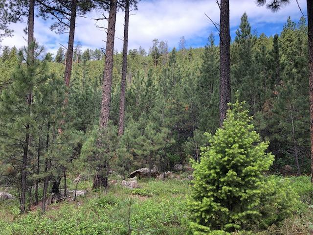 Tbd Allen Gulch Road, Wolf Creek, MT 59648 (MLS #21910468) :: Andy O Realty Group