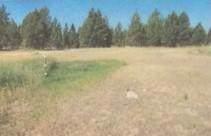 244 Elk Meadows Drive, Eureka, MT 59917 (MLS #22000572) :: Andy O Realty Group
