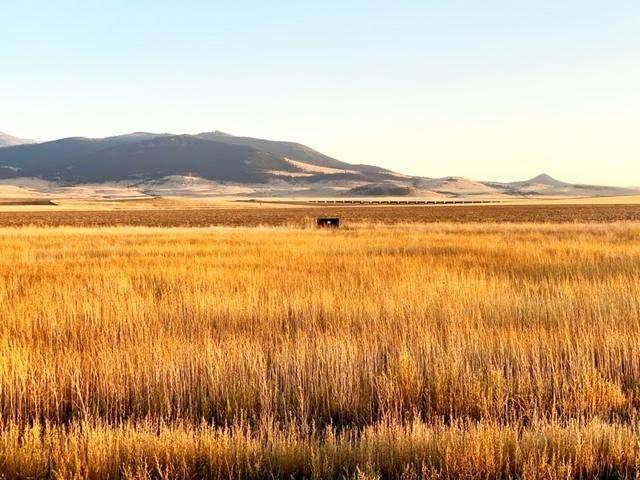 2256 Spring Wheat Loop, East Helena, MT 59635 (MLS #22014840) :: Performance Real Estate