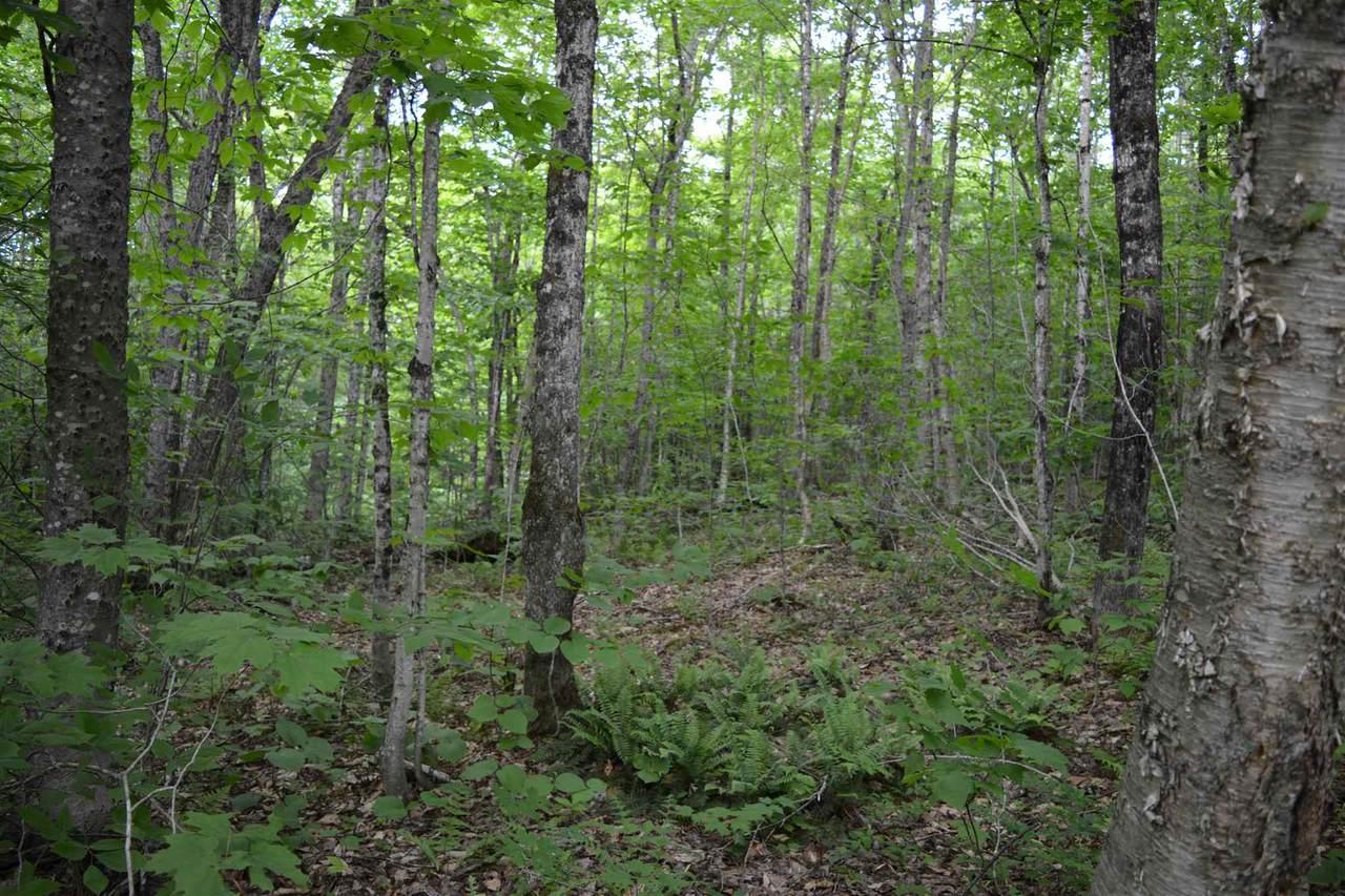 Lot 40 Hampshire Woods Loop - Photo 1