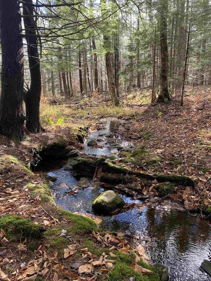 Lot #20 Wilderness Village Drive - Photo 1