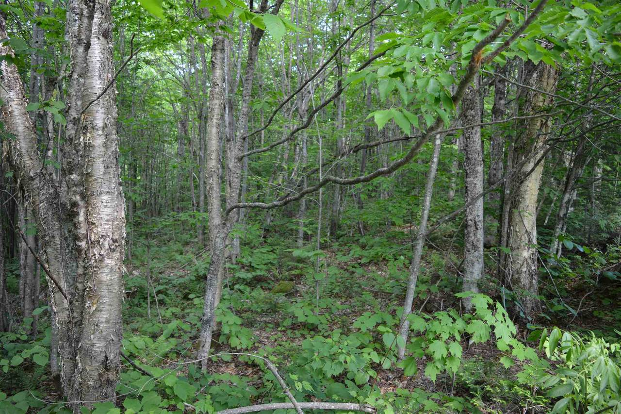 LOt 39 Hampshire Woods Loop - Photo 1