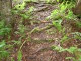 423 Steven Mill Slide Road - Photo 17