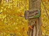 000 Leland Jones Trail - Photo 9